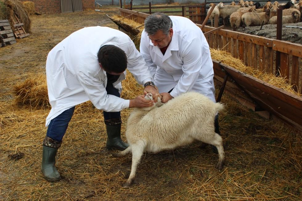 экспертиза доступна купить овец в ростовской области новые