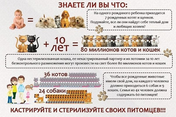 Как кастрировать собаку в домашних условиях